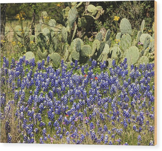 Cactus And Wild Flowers Wood Print