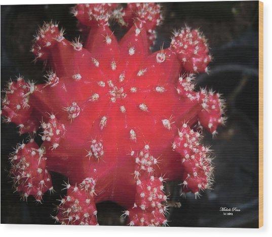Cactus Beauty  Wood Print