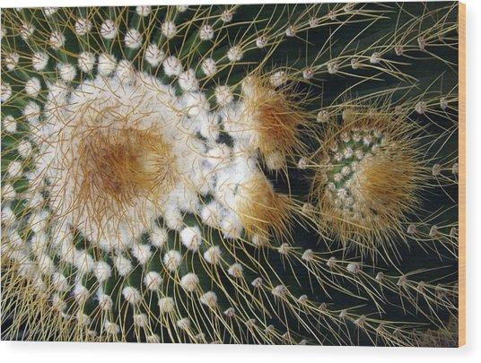 Cactus Close-up Wood Print