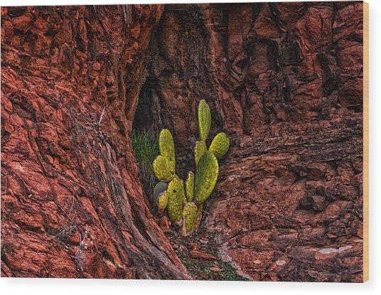 Cactus Dwelling Wood Print