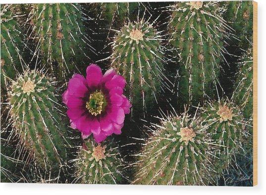 Cactus Flower Wood Print by Cole Black