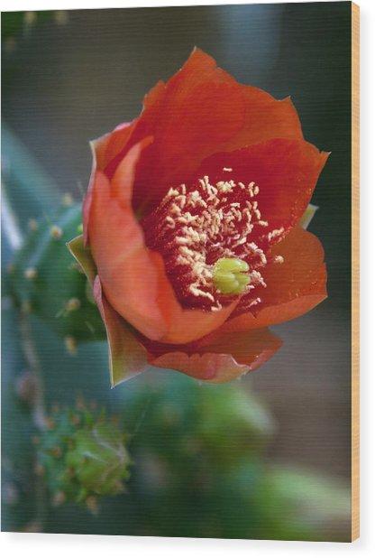 Cactus Flower Wood Print