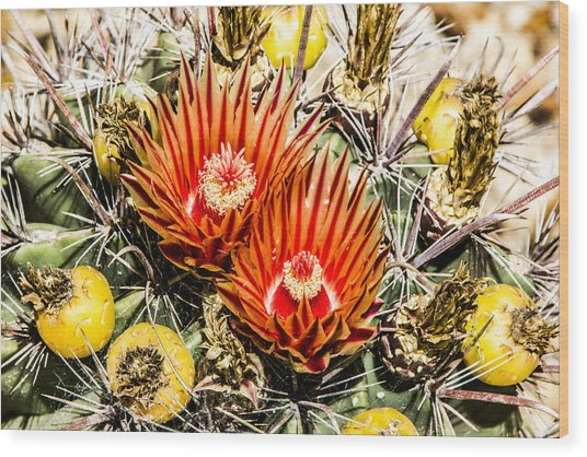 Cactus Flowers And Fruit Wood Print