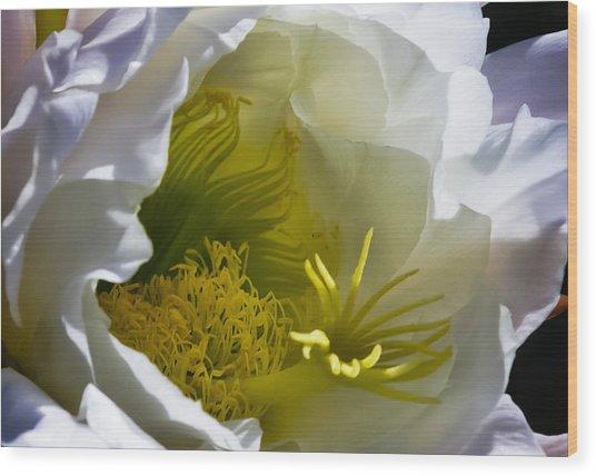 Cactus Interior Wood Print