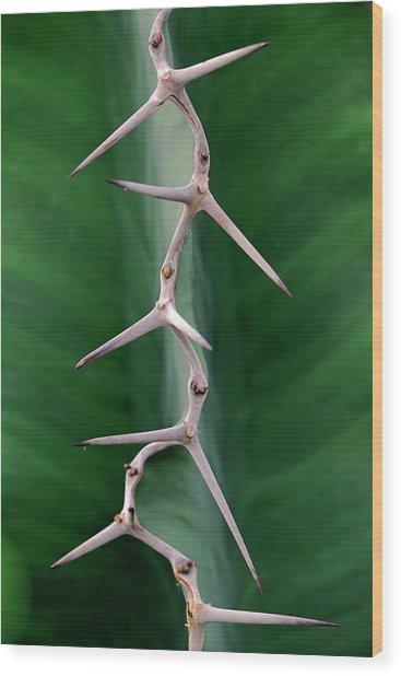 Cactus Spines Wood Print