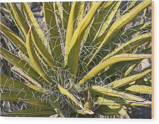 Cactus15 Wood Print