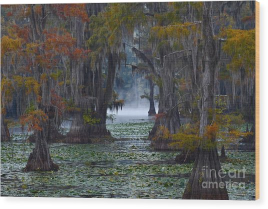 Caddo Lake Morning Wood Print