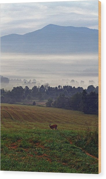 Cades Cove - Misty Morning Wood Print