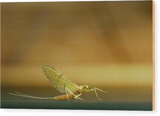 Cahill Mayfly Wood Print