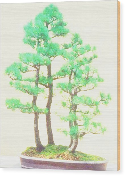 Caitlin Elm Bonsai Tree Wood Print
