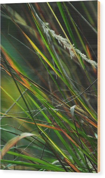 Calamagrostis Lines Wood Print