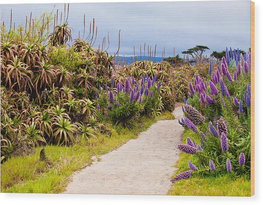 California Coastline Path Wood Print