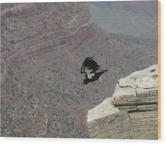 California Condor Taking Flight Wood Print