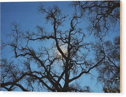 California Oak Sun Tree Wood Print