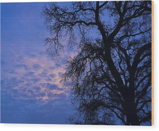 California Oak Sunrise Wood Print