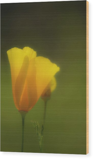 Wood Print featuring the photograph California Poppies 2 by Sherri Meyer
