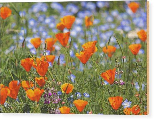 California Poppy Field Wood Print