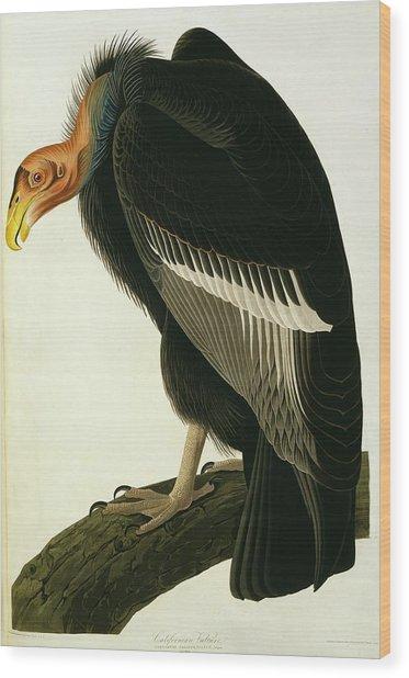Californian Condor Wood Print