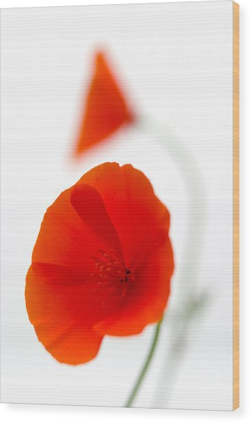 Californian Poppies 2 Wood Print