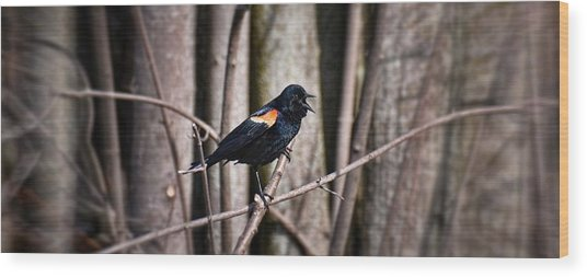 Call Of The Red Winged Blackbird Wood Print
