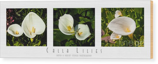 Calla Lilly Color Triptych Wood Print