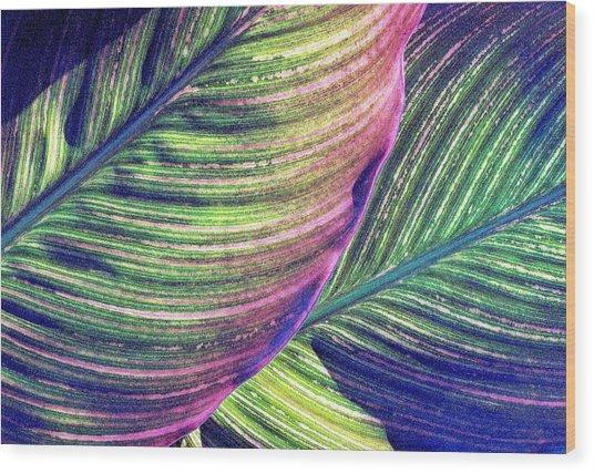 Calla Lily 1 Wood Print