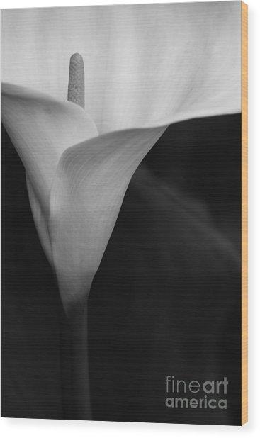 Calla Lily Corner Wood Print