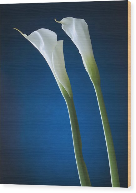 Calla Lily On Blue Wood Print