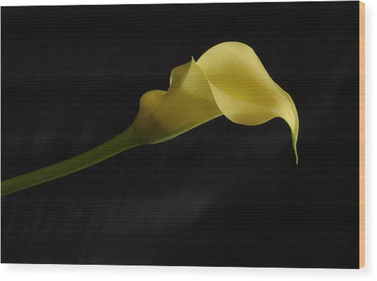 Calla Lily Yellow II Wood Print