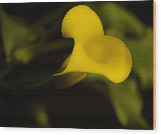 Calla Lily Yellow IIi Wood Print