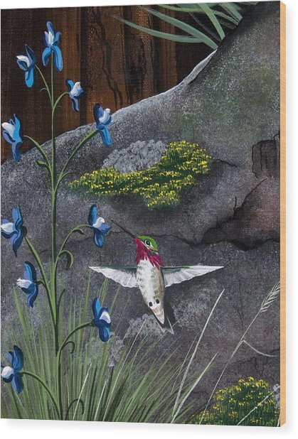 Calliope Hummingbird Wood Print