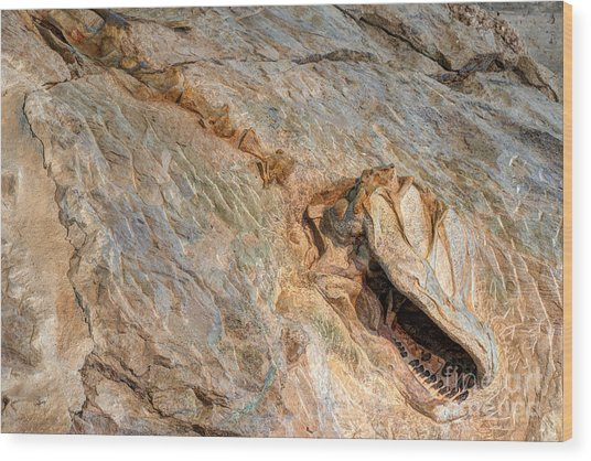 Camarasaurus Skeleton In The Morrison Formation At Dinosaur National Monument Wood Print