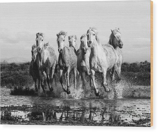 Camargue Horses At The Gallop Bw Wood Print