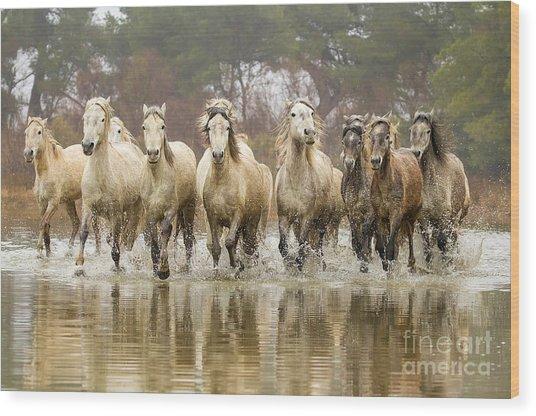 Camargue Horses At The Gallop Wood Print