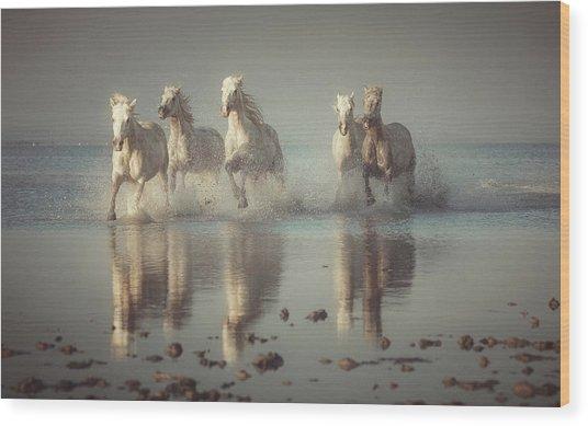 Camargue Horses Wood Print