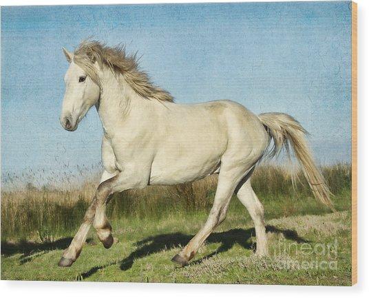 Camargue Stallion Wood Print