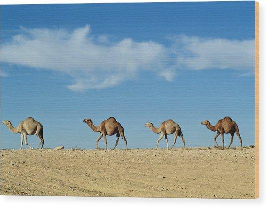 Camel Train Wood Print
