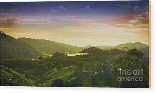 Cameron Highlands Wood Print by Receb Parsel