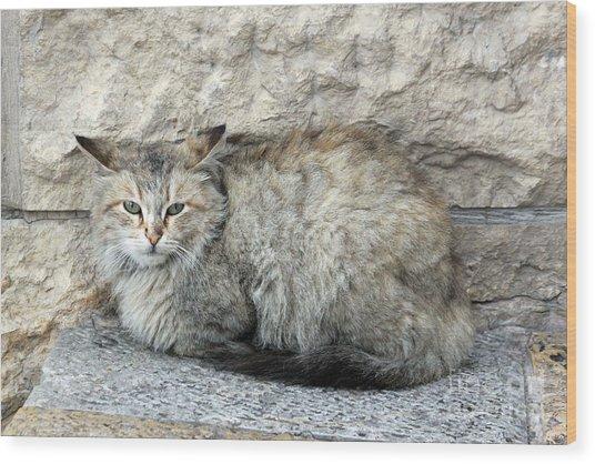 Camo Cat Wood Print