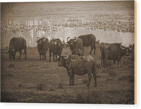 Can Not Roller Skate In A Buffalo Herd Wood Print by Frank Feliciano