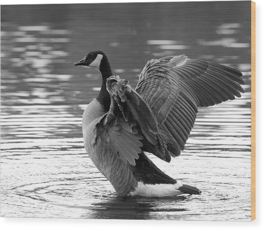 Canada Goose Black And White Wood Print