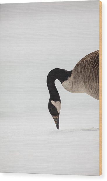 Canada Goose Point Wood Print