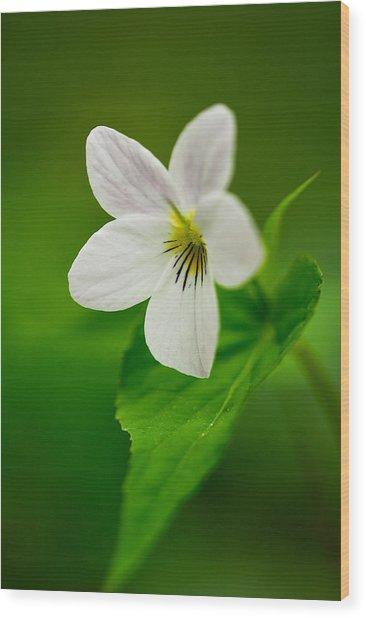 Canada Violet Macro Wood Print