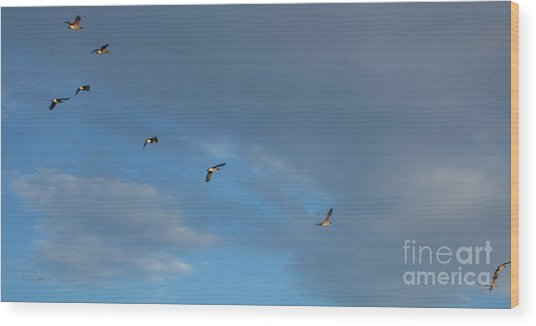 Canadian Geese 1 Of 3 Wood Print