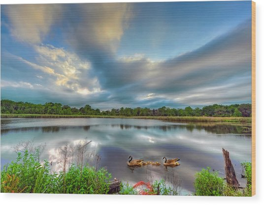 Canadian Geese On A Marylamd Pond Wood Print