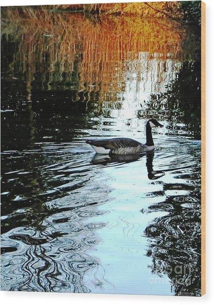 Canadian Goose At Burden  Wood Print