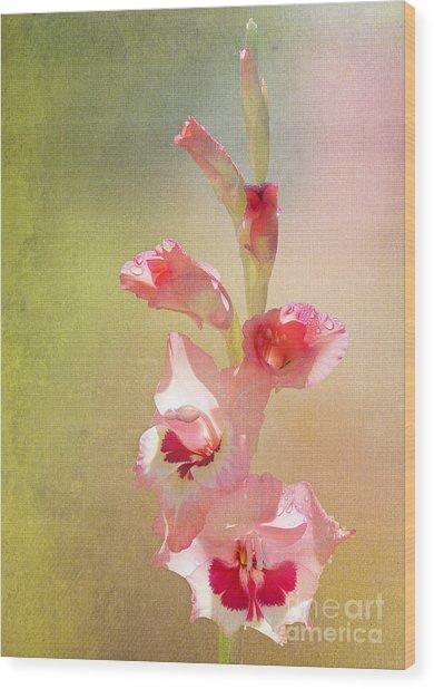 Candy Cane Gladiolas Wood Print
