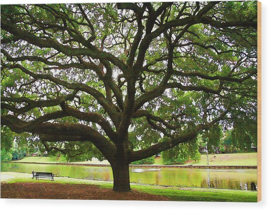Cane River Oak Wood Print