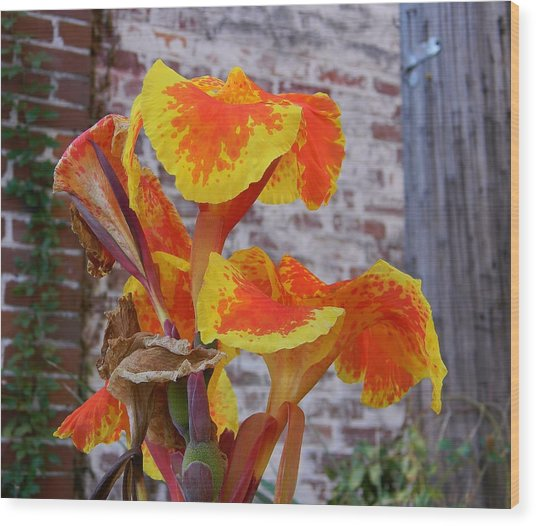 Canna Lily And Background Wood Print by Warren Thompson