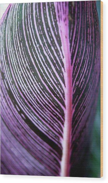 Canna Lily Leaf (canna Sp.) Wood Print